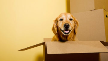 Quick Tips For Moving With Pets
